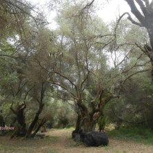 bosco a Creta