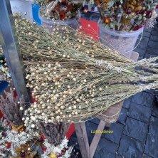 fiori di lino secchi