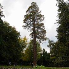 Giardino_sequoia_phVGaluppo