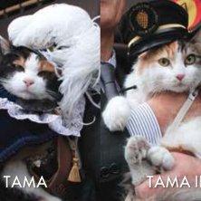 Tama e l'assistente