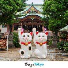 Tokyo gatti in Giappone