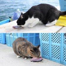 gatti dei pescatori