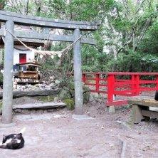 tempio isola dei gatti