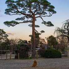 tramonto tempio Tokjo