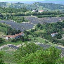 lavanda a Castelletto d'Erro (AL) Cr Camilla Assandri