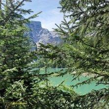acqua e alberi al lago di Braies