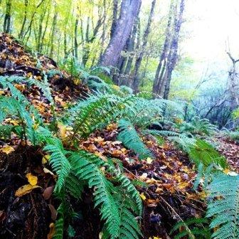 felci nel bosco