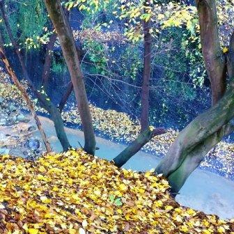 foglie e acqua a Monterano
