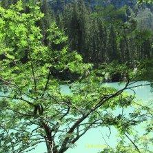 sfumature di verde al lago di Braies