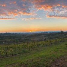 Paesaggi vendemmia Monferrato