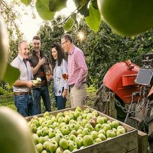 raccolta mele Irlanda