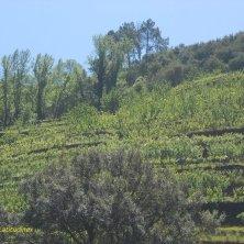 vigneto sul Douro vini portoghesi