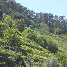 vigneto valle del Douro vini portoghesi