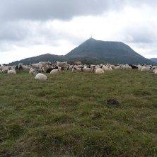 Puy-de-Dome e pecore slow