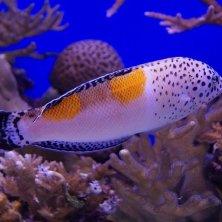 pesci mar Rosso Israele