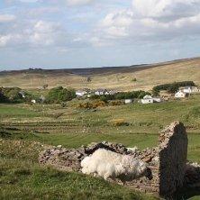Donegal pecore Wild Atlantic Way