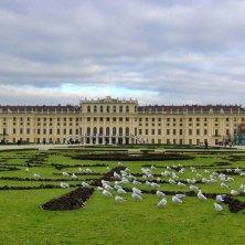gabbiani al palazzo Vienna