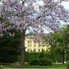primavera a Schönbrunn