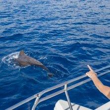 avvistamento delfini e balene a Tenerife