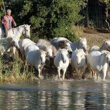 cavalli Camargue Aigues Mortes