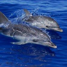 delfini in acqua
