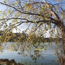 ginko biloba autunno