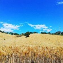 campi coltivati nei dintorni