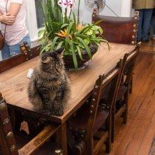 gatti di Hemingway nella casa