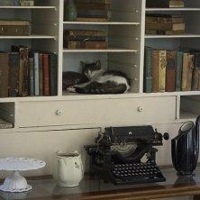 gatti di Hemingway nello studio