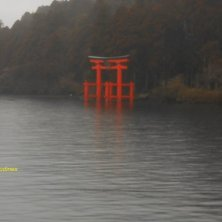 torii avvolto nella nebbia lago Kawaguchi