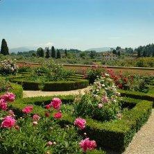 rose ai giardini di Boboli