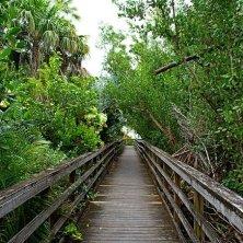 vegetazione Key West