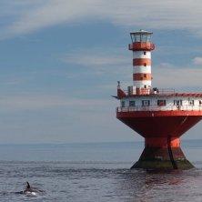 balene e faro a Tadoussac