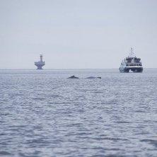 escursione balene