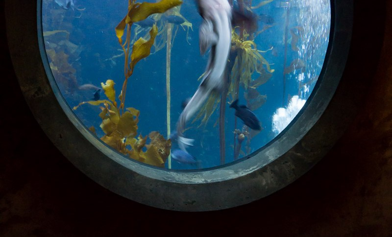 Shark Swimming Past Aquarium Window