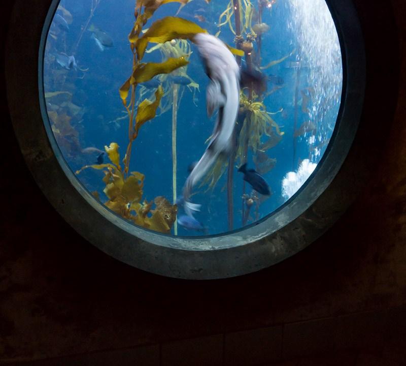 Shark Swimming Past Aquarium Window