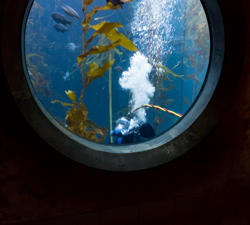 Diver Swimming Past Aquarium Window