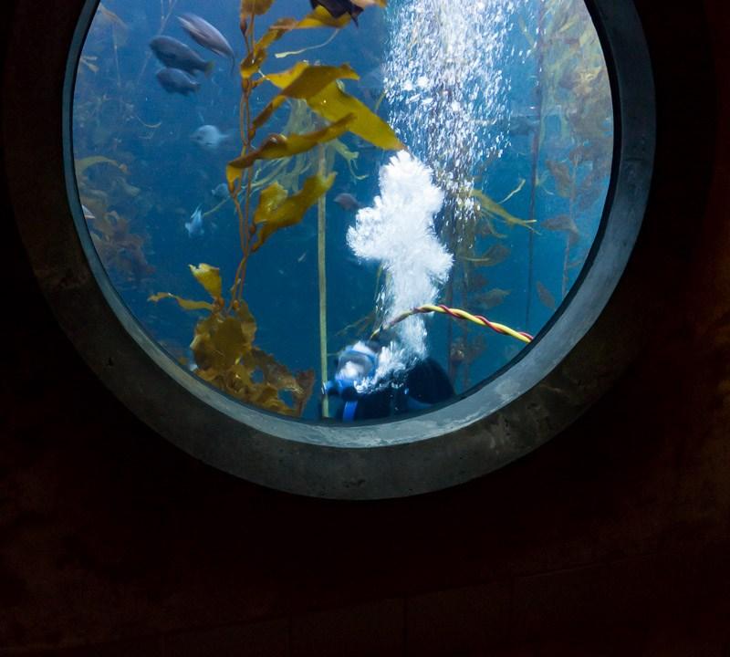 Diver Swimming Past Aquarium Window