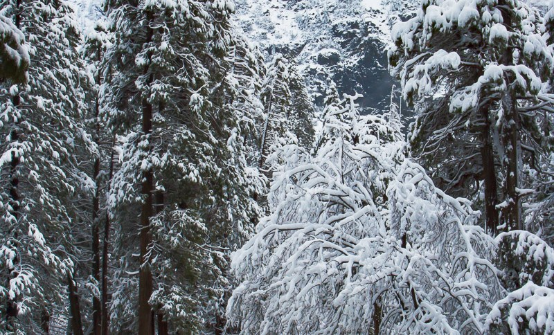 Snow Covered Boulders and Trees Near Base of Yosemite Falls