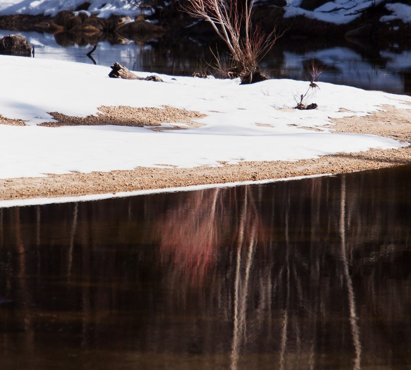 Dogwood Along Snow Covered Banks of Merced River