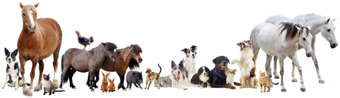 latrobe vet group treat a wide variety of animals - Local services & suppliers we use & recommend