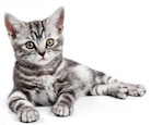 the top kitten - Arthritis - what can we do about this?