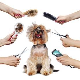 grooming - Grooming