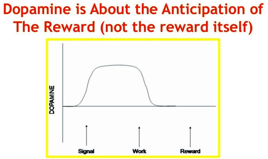 dopamine-anticipation