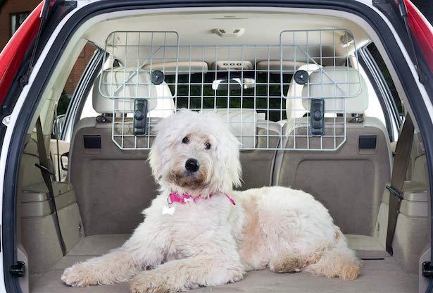 Cane in auto, cosa dice la legge - La tua auto