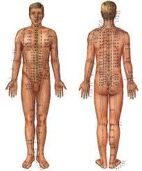 Les douze méridiens et la points tsubos représentés sur le corp humain.