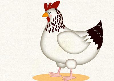 Chicken Identification Chart