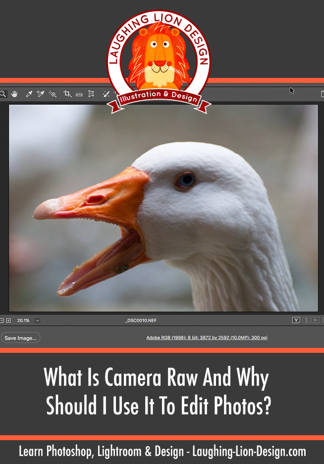 What Is Adobe Camera Raw?