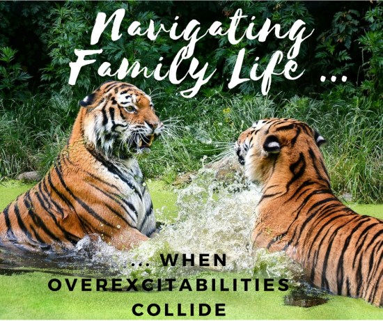 when overexcitabilities collide - tigers fighting