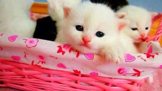 cute cat image with
